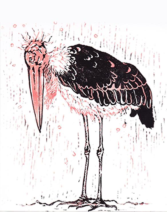 Stern Nijland, illustratie